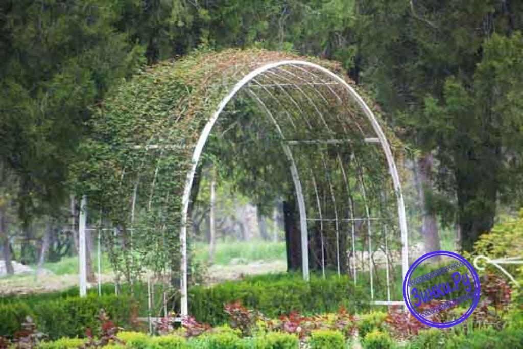 Арки, способные выдержать вес разросшихся растений. Лобня. Фото - 6