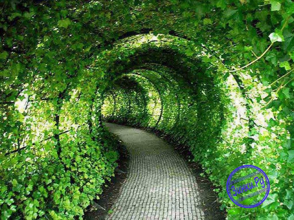 Арки, способные выдержать вес разросшихся растений. Москва. Фото - 10