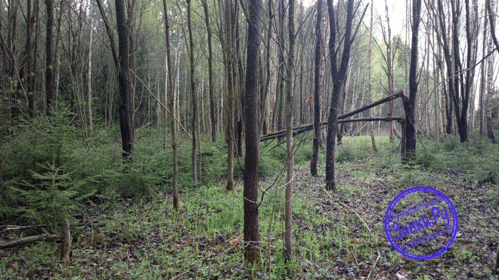 Продам земельный участок. Смоленск. Фото - 7