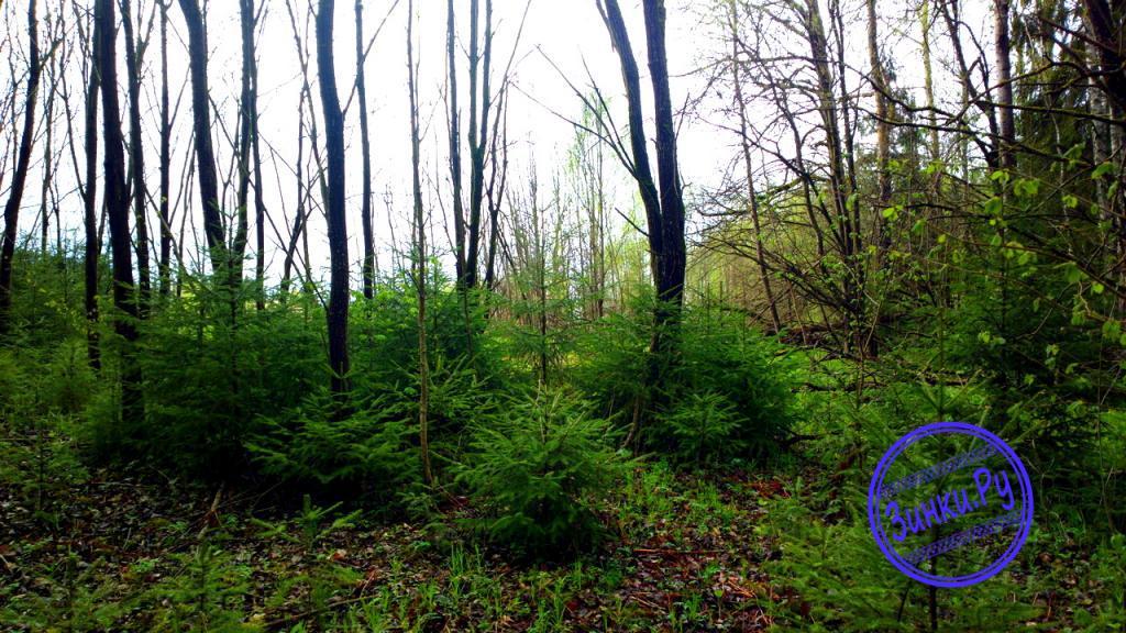 Продам земельный участок. Смоленск. Фото - 8